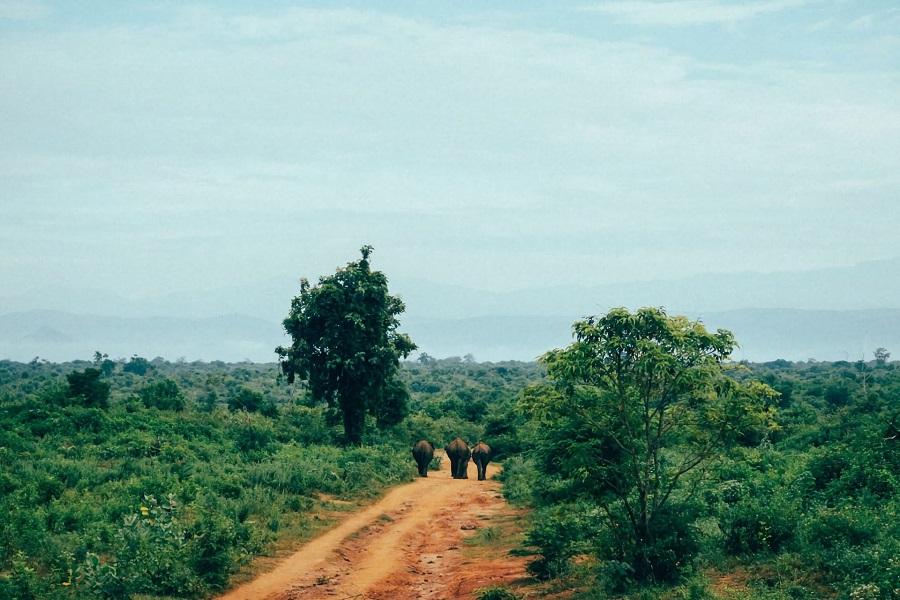 Vacances au Sri Lanka : 4 des meilleurs endroits à découvrir